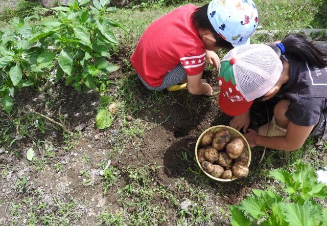 農地のまま活用する具体的な4つの方法